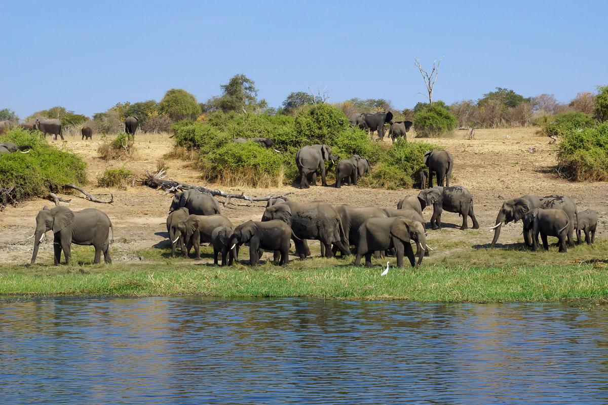 Conservation Hunting Trophy - Elephant