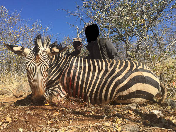 Conservation Hunting Trophies - Zebra