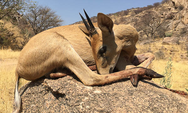 Conservation Hunting Trophies - Duiker