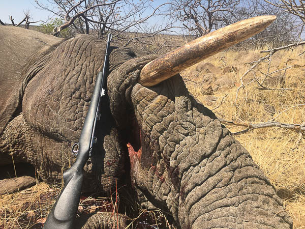 Conservation Hunting Trophies - Elephant